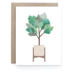 fig-tree_01